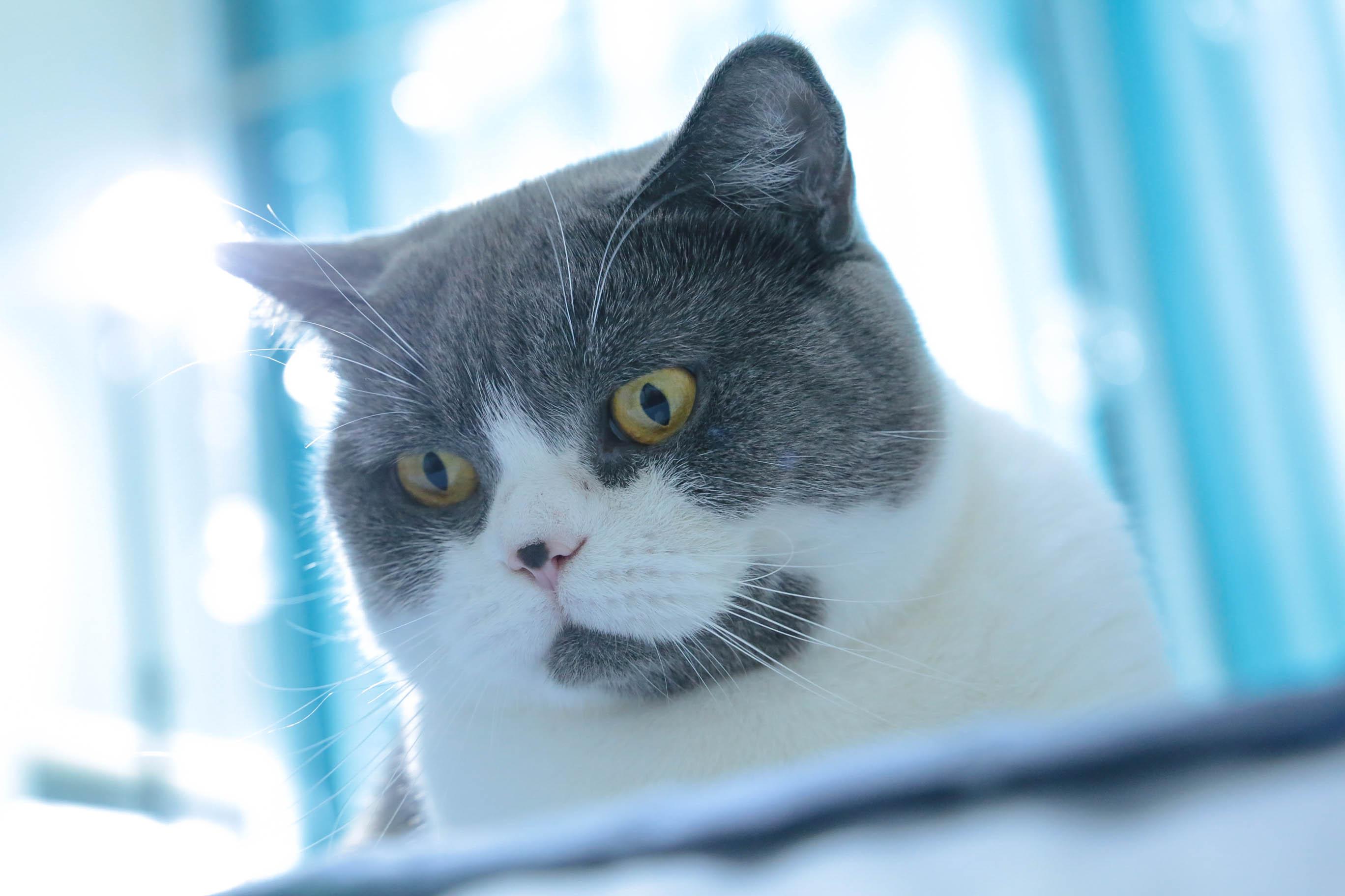 柿子菌的猫.jpg
