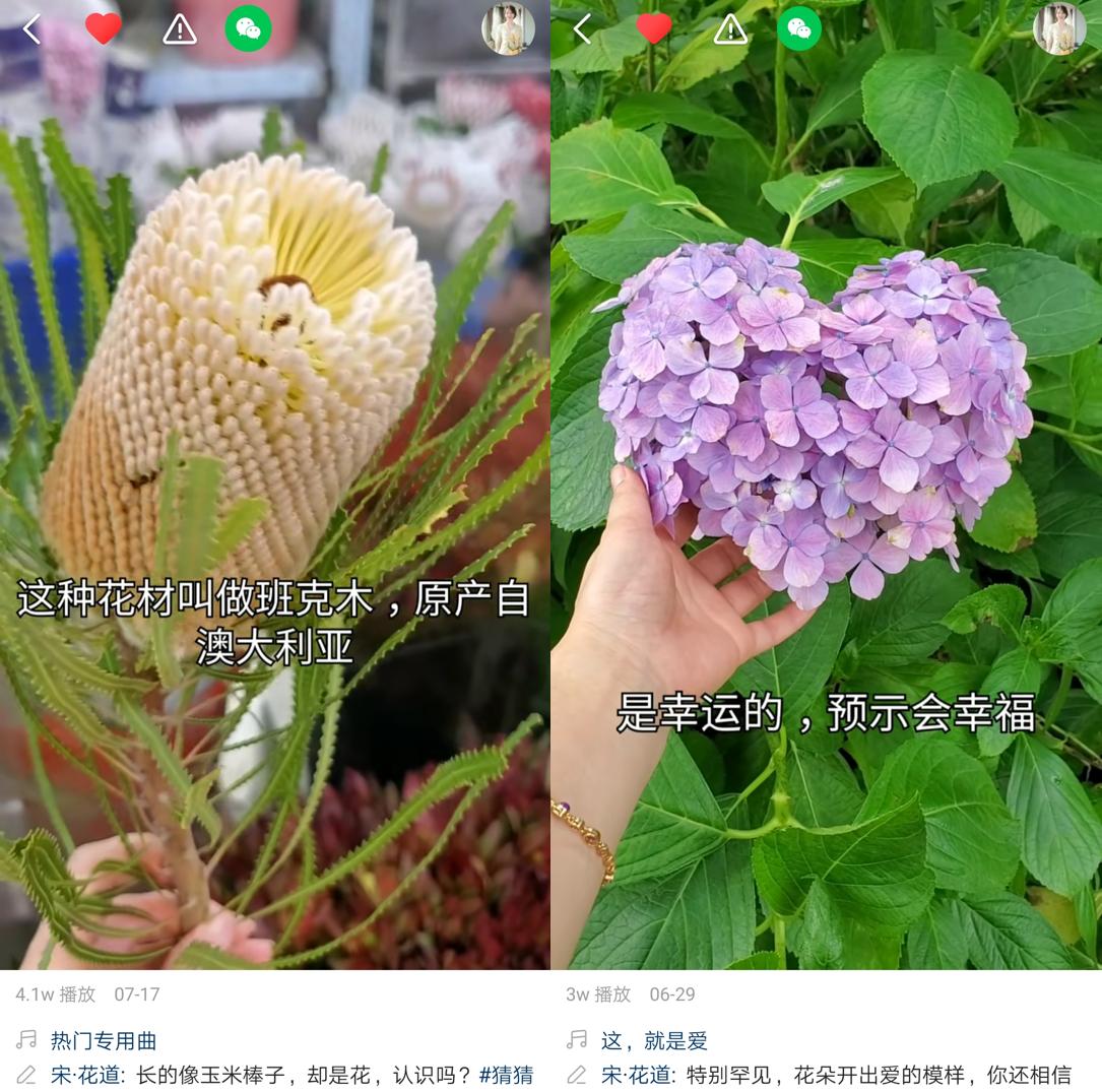 图片包含 鲜花, 植物  描述已自动生成