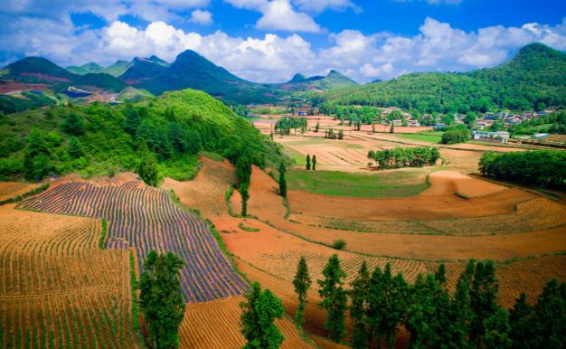 平台推动农业化产业升级,拼多多式的供给侧变革